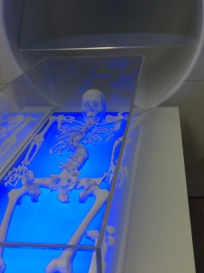 A replica of the skeleton of King RIchard III
